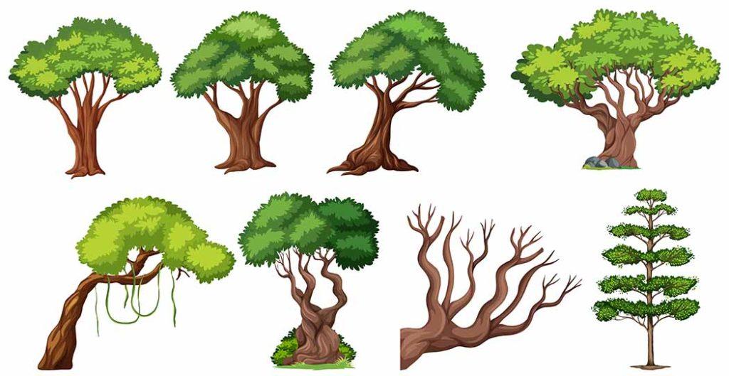 oud tree
